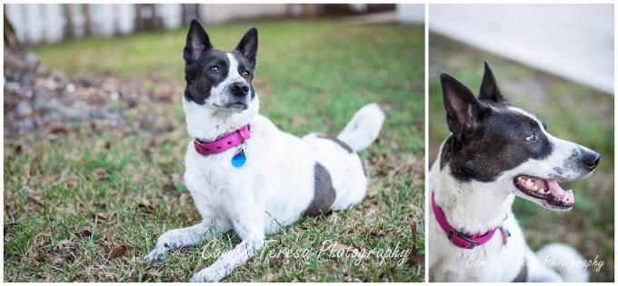 Dogs, Canaan, Pet Photography, South Florida
