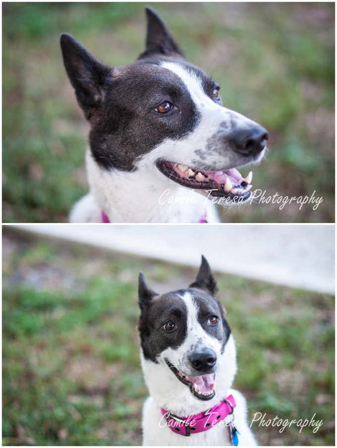 Dogs, Canaan, Pet Photography, South Florida